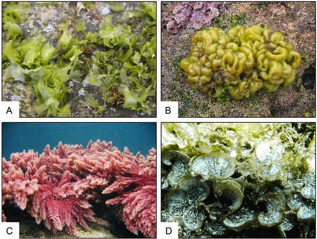 A guide for harvesting practices of macroalgae in Azores (NE Atlantic): The project ASPAZOR and the case study of Asparagopsis spp.